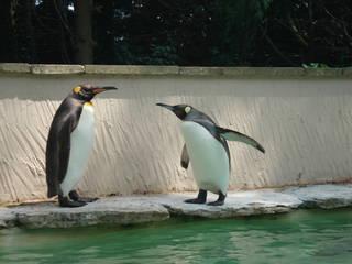 Pinguine im Birdland. © mollyig