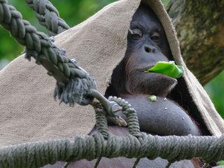 Tierfütterungen in Zoos