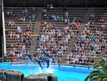 Delfinshow: Palmitos Park