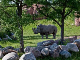 Nashorn im Toronto Zoo. © leander.canaris
