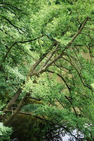 Baumwipfelpfad