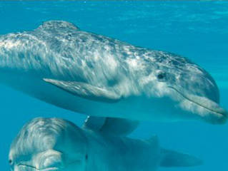 Aquarium Mar del Plata © Aquarium Mar del Plata