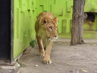 Kushiro Zoo  © Kushiro Zoo