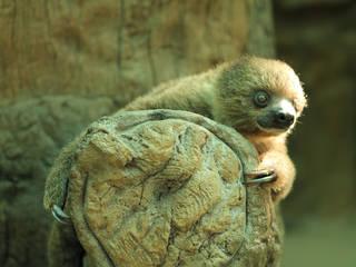 © Naples Zoo