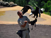 Greifvogelschau: Palmitos Park