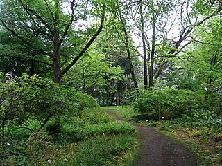 Im Späth-Arboretum Berlin. © Daderot